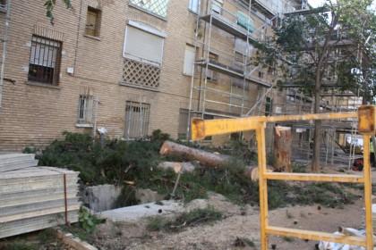 pino derribado durante los trabajos